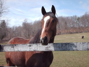 Theraputic Horse Facility