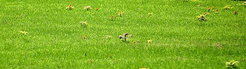 green-grass-leonid-mamchenkov