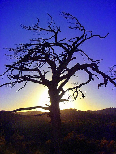 tree-silhouette-neilsphotography