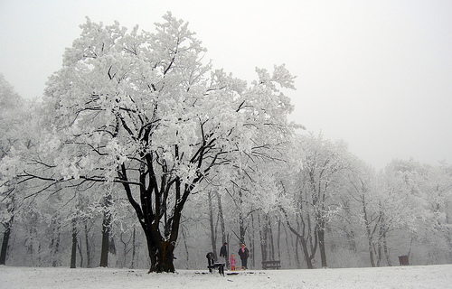 frosty-tree-nagy-david