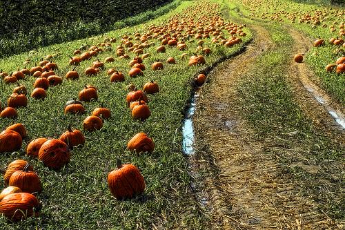 pumpkin-road-mysza831