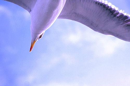 flying-sky-high-mindfulness