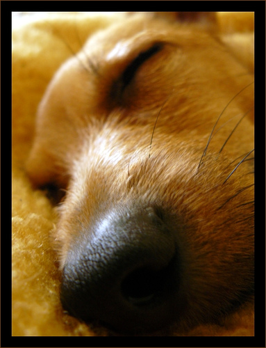 sleeping-dog-mr_sellars