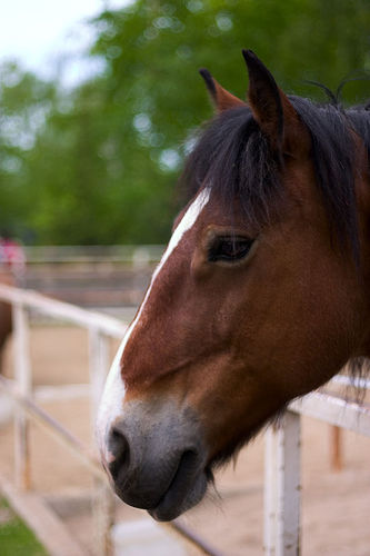 horse-alisdair