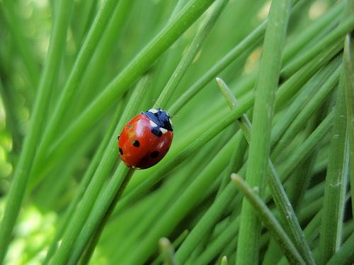 ladybug-climbing-neeku