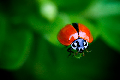 ladybugs-start-ur-engines-anderson-mancini
