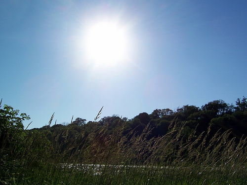 sunny-skies-sarahdeer