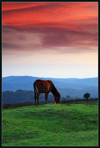 sunset-horse-evgeni-dinev