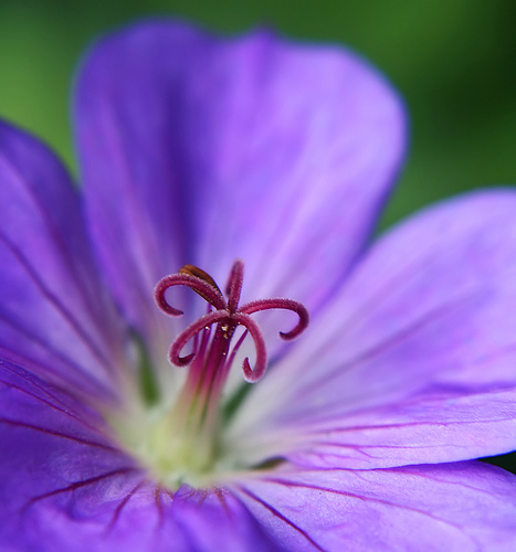 flower-2-aussiegall