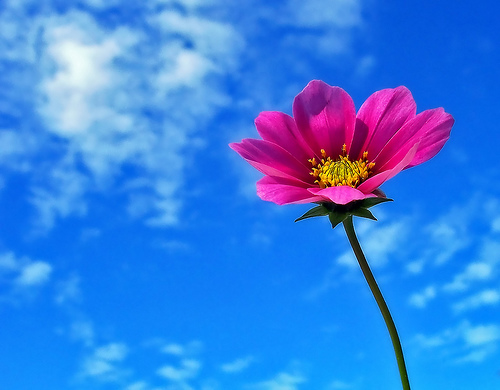 flower-in-blue-sky-aussiegall