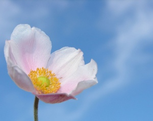 flower - aussiegall