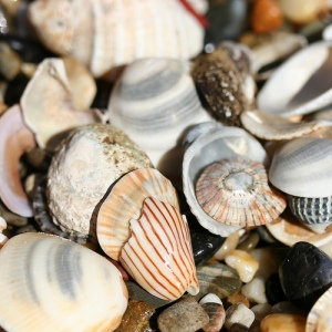 Sea Shells - frumbert
