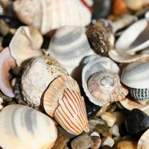 Sea Shells - frumbert