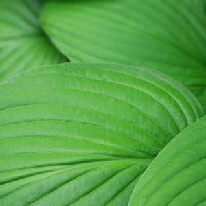 Green Leaf - takacsi75