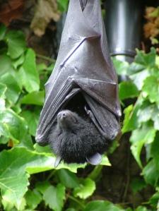 Bat - charliejb