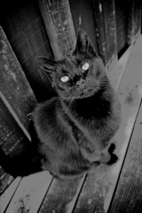 Black Cat - Peti Deuxmont