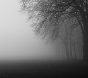 Fog - keepwaddling1