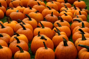 Pumpkins Galore - Muffet