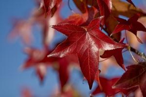 Fall - peasap