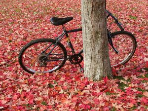 Leaves & bike - basykes