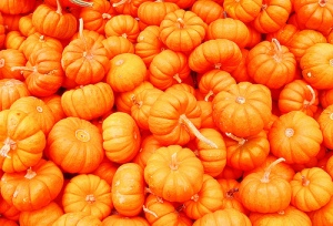 Pumpkins - shelley_ginger
