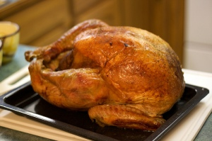 Thanksgiving Turkey - tuchodi